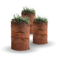 3 lawn core plugs showing grass and dirt on a white background