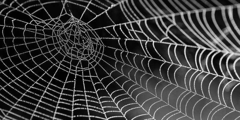 white spiderweb covered in dew against a black background